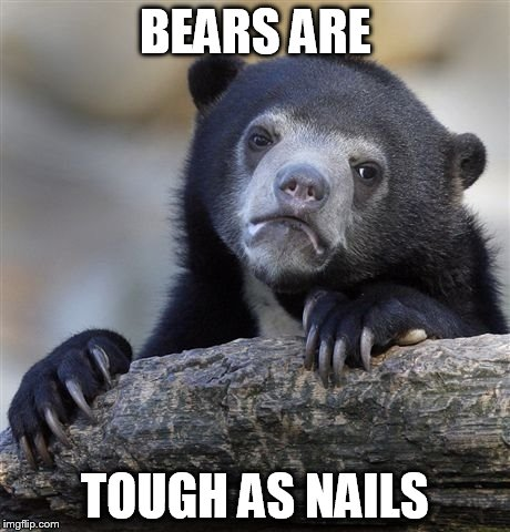 Confession Bear Meme | BEARS ARE TOUGH AS NAILS | image tagged in memes,confession bear | made w/ Imgflip meme maker