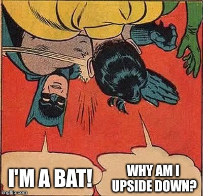 Batman Slapping Robin Meme | WHY AM I UPSIDE DOWN? I'M A BAT! | image tagged in memes,batman slapping robin | made w/ Imgflip meme maker
