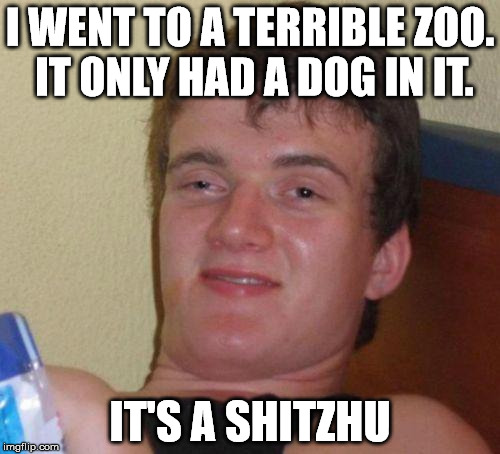 stoned guy | I WENT TO A TERRIBLE ZOO. IT ONLY HAD A DOG IN IT. IT'S A SHITZHU | image tagged in stoned guy | made w/ Imgflip meme maker