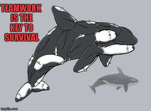 If only penguins knew... | TEAMWORK IS THE KEY TO SURVIVAL | image tagged in penguin orca,memes,penguins,orca,funny,animals | made w/ Imgflip meme maker