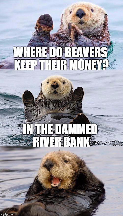 The beaver of Wall Street |  WHERE DO BEAVERS KEEP THEIR MONEY? IN THE DAMMED RIVER BANK | image tagged in bad pun otter,funny memes,bad pun,otter,beaver,money | made w/ Imgflip meme maker