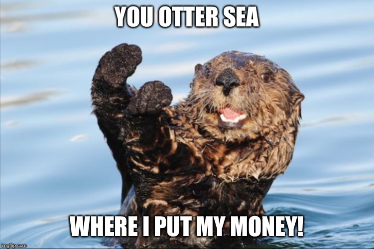 NO THANK YOU | YOU OTTER SEA WHERE I PUT MY MONEY! | image tagged in no thank you | made w/ Imgflip meme maker