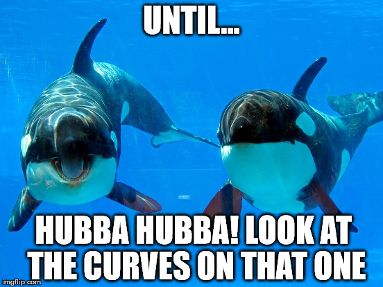 UNTIL... HUBBA HUBBA! LOOK AT THE CURVES ON THAT ONE | made w/ Imgflip meme maker