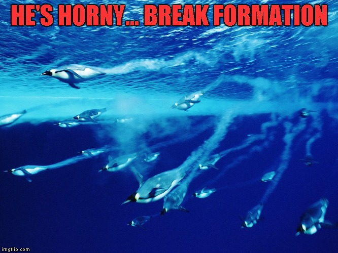 HE'S HORNY... BREAK FORMATION | made w/ Imgflip meme maker