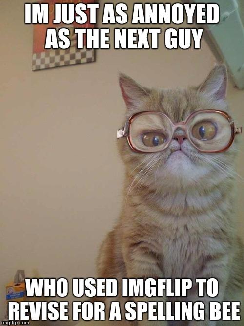 Confused Cat Imgflip