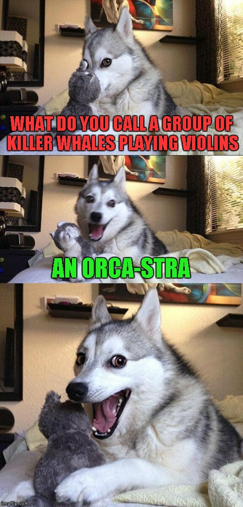 Bad Pun Dog Meme | WHAT DO YOU CALL A GROUP OF KILLER WHALES PLAYING VIOLINS AN ORCA-STRA | image tagged in memes,bad pun dog | made w/ Imgflip meme maker