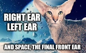 3 eared cat..., | RIGHT EAR LEFT EAR AND SPACE, THE FINAL FRONT EAR | image tagged in cats,outer space | made w/ Imgflip meme maker