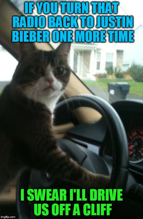 JoJo The Driving Cat (A  ghostofchurch Template) | IF YOU TURN THAT RADIO BACK TO JUSTIN BIEBER ONE MORE TIME I SWEAR I'LL DRIVE US OFF A CLIFF | image tagged in jojo the driving cat,funny memes,justin bieber,cat,driving,laughs | made w/ Imgflip meme maker