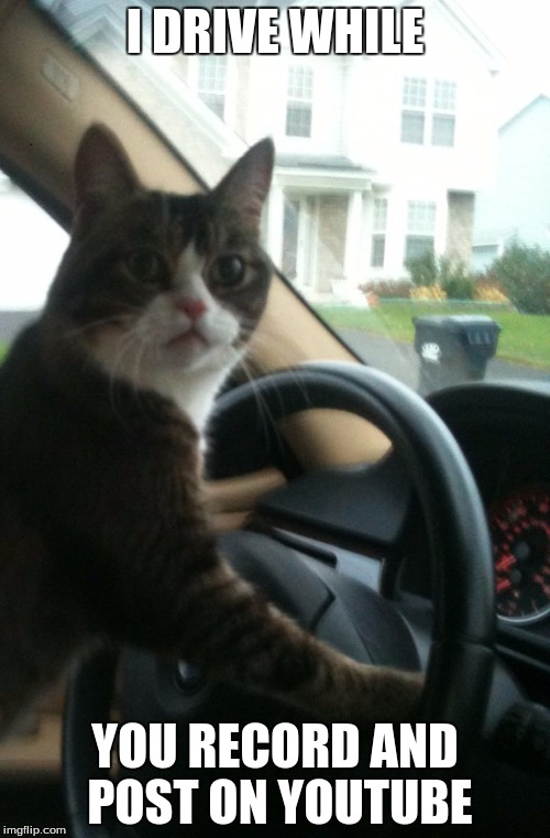 Family-Friendly Memes?, I will do! | I DRIVE WHILE YOU RECORD AND POST ON YOUTUBE | image tagged in jojo the driving cat,funny cats | made w/ Imgflip meme maker