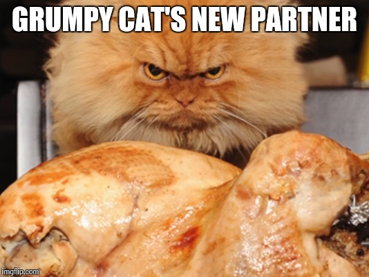 GRUMPY CAT'S NEW PARTNER | made w/ Imgflip meme maker
