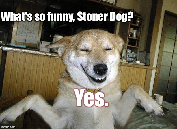 10 Dog | What's so funny, Stoner Dog? Yes. | image tagged in 10 dog | made w/ Imgflip meme maker
