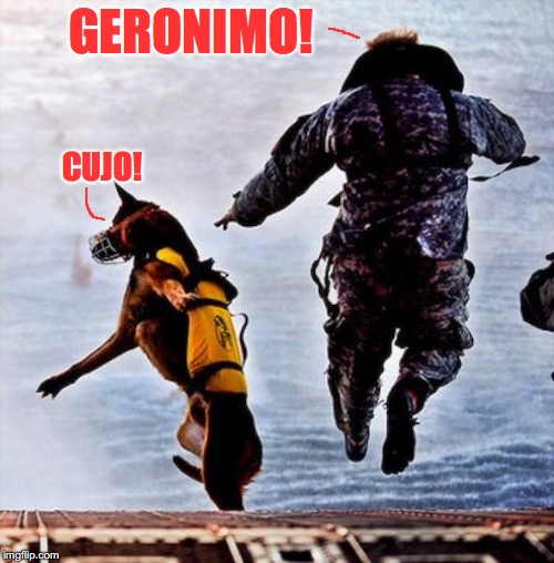 The Jump |  GERONIMO! CUJO! | image tagged in funny dogs,parachute | made w/ Imgflip meme maker