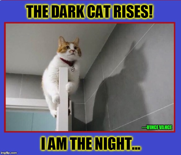 The Dark Cat Rises |  THE DARK CAT RISES! I AM THE NIGHT... —VINCE VANCE | image tagged in i am the night,funny cat memes,vince vance,batman's shadow,batman | made w/ Imgflip meme maker