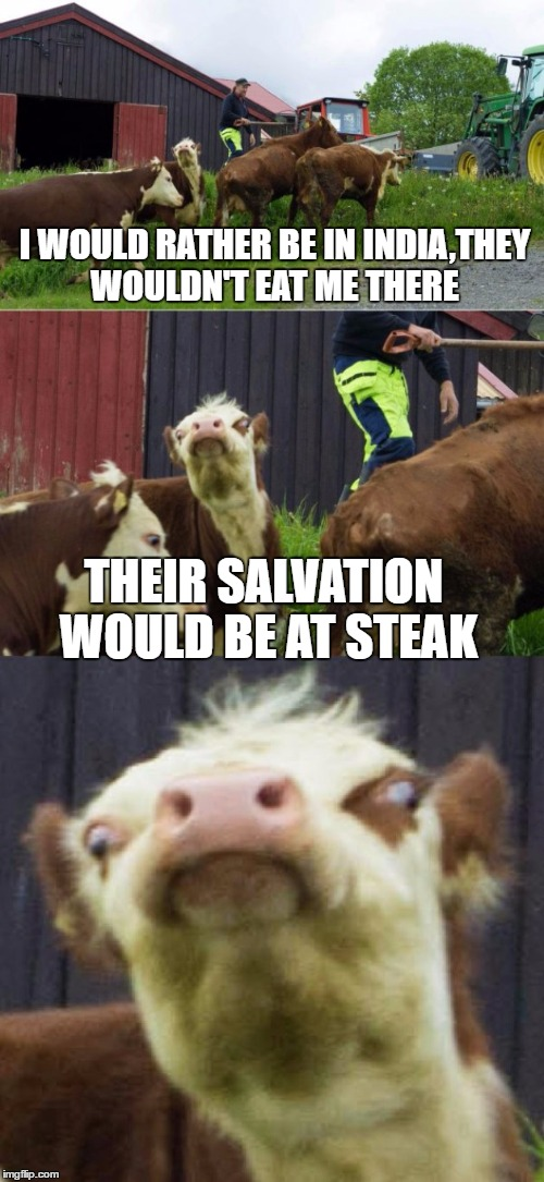 Bad pun cow  | I WOULD RATHER BE IN INDIA,THEY WOULDN'T EAT ME THERE THEIR SALVATION WOULD BE AT STEAK | image tagged in bad pun cow,memes,religion,steak,salvation,india | made w/ Imgflip meme maker