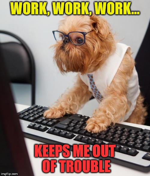 Image result for dog work