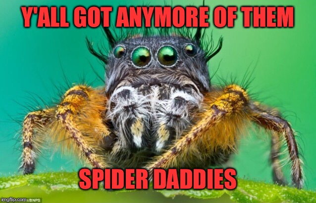 Y'ALL GOT ANYMORE OF THEM SPIDER DADDIES | made w/ Imgflip meme maker