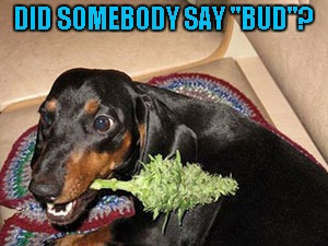 "DID SOMEBODY SAY ""BUD""? 