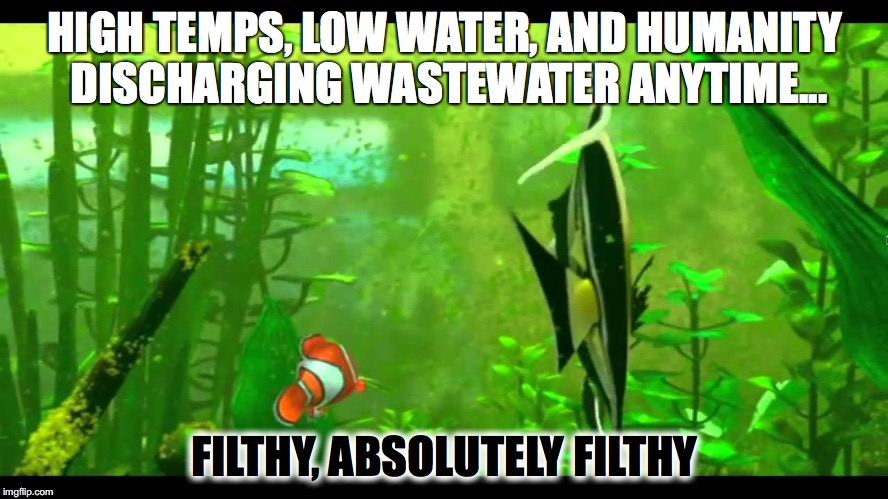 The Recent Algal Bloom | HIGH TEMPS, LOW WATER, AND HUMANITY DISCHARGING WASTEWATER ANYTIME... FILTHY, ABSOLUTELY FILTHY | image tagged in algae,finding nemo,nemo,gill,waste,water | made w/ Imgflip meme maker