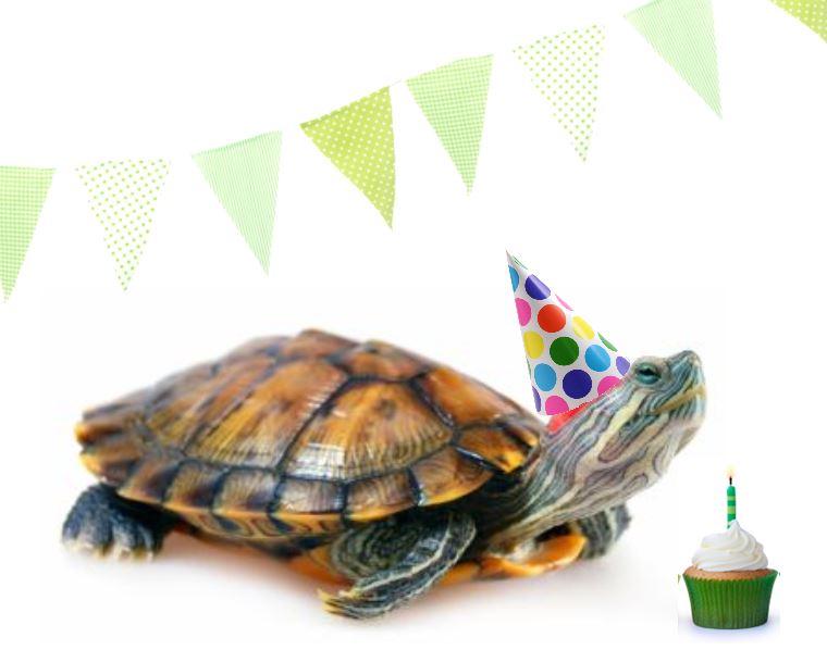 turtle birthday turtle birthday Blank Template   Imgflip turtle birthday