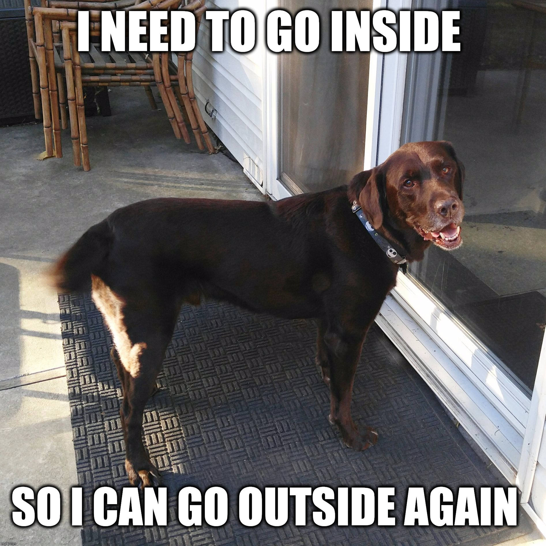 I need to go inside, so I can go outside again  | I NEED TO GO INSIDE SO I CAN GO OUTSIDE AGAIN | image tagged in chuckie the chocolate lab,funny dog memes,labrador,go inside,funny,funny memes | made w/ Imgflip meme maker