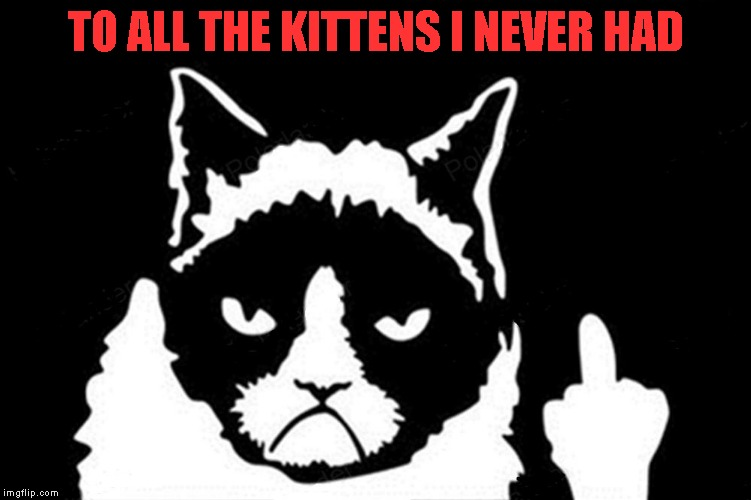 TO ALL THE KITTENS I NEVER HAD | made w/ Imgflip meme maker