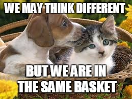 HATE SHOULDN'T GET IT DONE HILLARY |  WE MAY THINK DIFFERENT; BUT WE ARE IN THE SAME BASKET | image tagged in dogs an cats,election 2016 fatigue,hillary clinton 2016,not so different | made w/ Imgflip meme maker