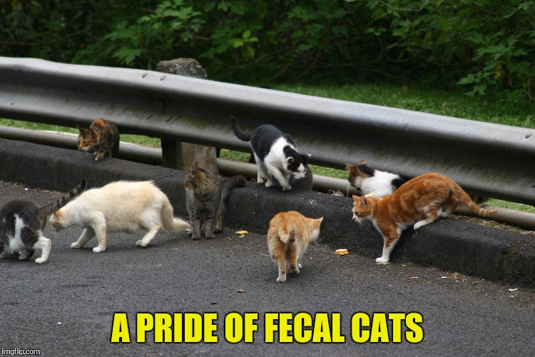A PRIDE OF FECAL CATS | made w/ Imgflip meme maker