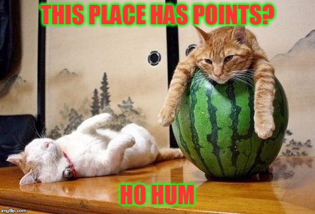 THIS PLACE HAS POINTS? HO HUM | made w/ Imgflip meme maker
