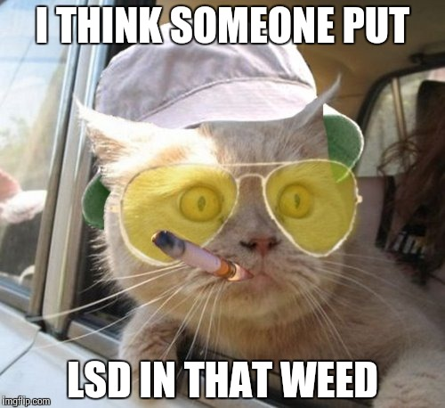 Fear And Loathing Cat | I THINK SOMEONE PUT LSD IN THAT WEED | image tagged in memes,fear and loathing cat | made w/ Imgflip meme maker
