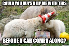 COULD YOU GUYS HELP ME WITH THIS BEFORE A CAR COMES ALONG? | image tagged in polar bear,memes,funny,new,original meme | made w/ Imgflip meme maker