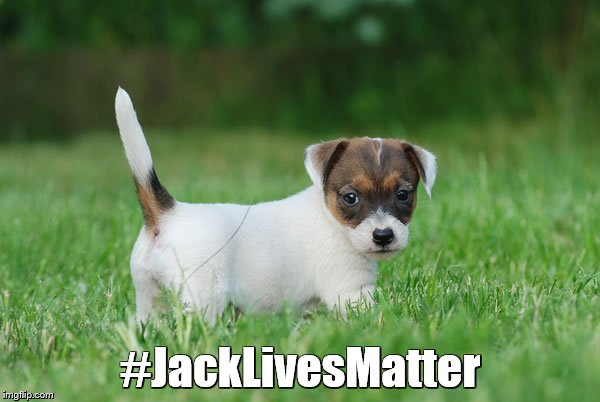 Jack Russell Terrier |  #JackLivesMatter | image tagged in memes,puppies,dogs,black lives matter | made w/ Imgflip meme maker