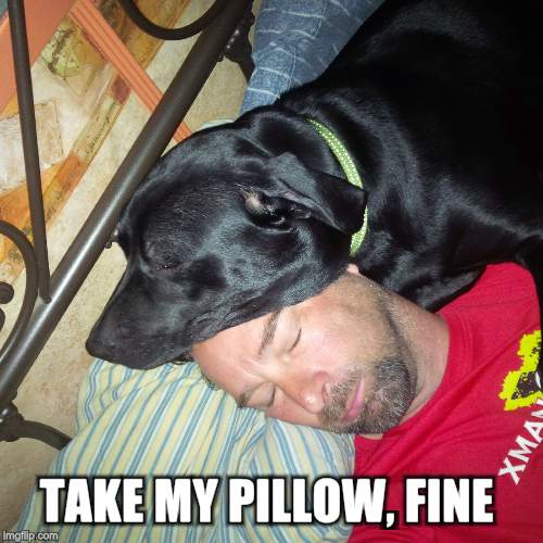 TAKE MY PILLOW, FINE | made w/ Imgflip meme maker