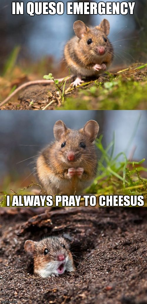 Just for the pun of it.... | IN QUESO EMERGENCY I ALWAYS PRAY TO CHEESUS | image tagged in bad pun mouse | made w/ Imgflip meme maker