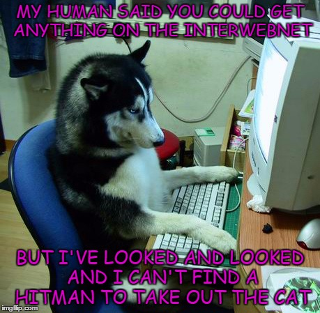 Taking out the cat | MY HUMAN SAID YOU COULD GET ANYTHING ON THE INTERWEBNET BUT I'VE LOOKED AND LOOKED AND I CAN'T FIND A HITMAN TO TAKE OUT THE CAT | image tagged in memes,taking out the cat,hitman,dog | made w/ Imgflip meme maker