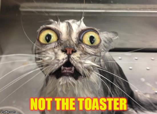 NOT THE TOASTER | made w/ Imgflip meme maker