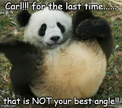 Carl the poser panda | Carl!!! for the last time...... that is NOT your best angle!! | image tagged in meanwhile in pandaland,carl the panda,drunk panda,panda,cute panda,full moon | made w/ Imgflip meme maker