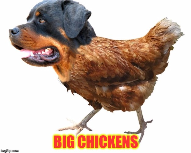 BIG CHICKENS | made w/ Imgflip meme maker