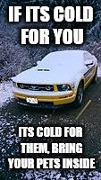 IF ITS COLD FOR YOU ITS COLD FOR THEM, BRING YOUR PETS INSIDE | made w/ Imgflip meme maker