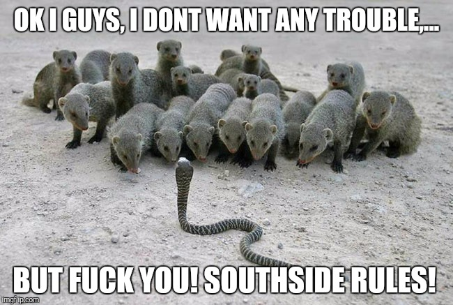 OK I GUYS, I DONT WANT ANY TROUBLE,... BUT F**K YOU! SOUTHSIDE RULES! | made w/ Imgflip meme maker