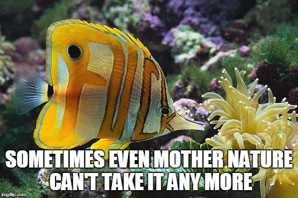 %$@# IT Fish | SOMETIMES EVEN MOTHER NATURE CAN'T TAKE IT ANY MORE | image tagged in memes,mother nature | made w/ Imgflip meme maker
