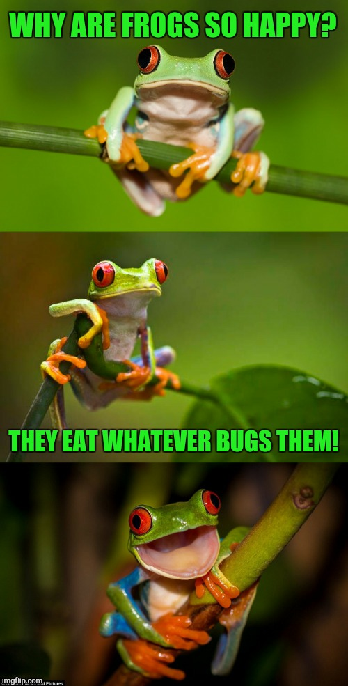 Frog Puns | WHY ARE FROGS SO HAPPY? THEY EAT WHATEVER BUGS THEM! | image tagged in frog puns,funny meme,frog,bugs,jokes,laugh | made w/ Imgflip meme maker