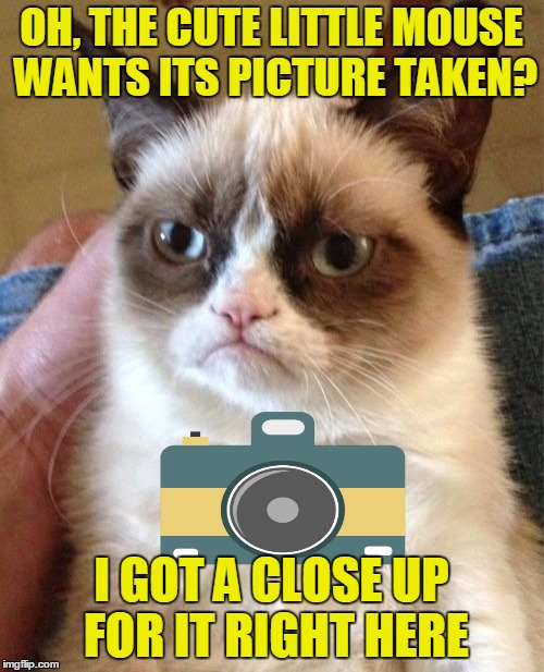 Grumpy Cat Meme | OH, THE CUTE LITTLE MOUSE WANTS ITS PICTURE TAKEN? I GOT A CLOSE UP FOR IT RIGHT HERE | image tagged in memes,grumpy cat | made w/ Imgflip meme maker