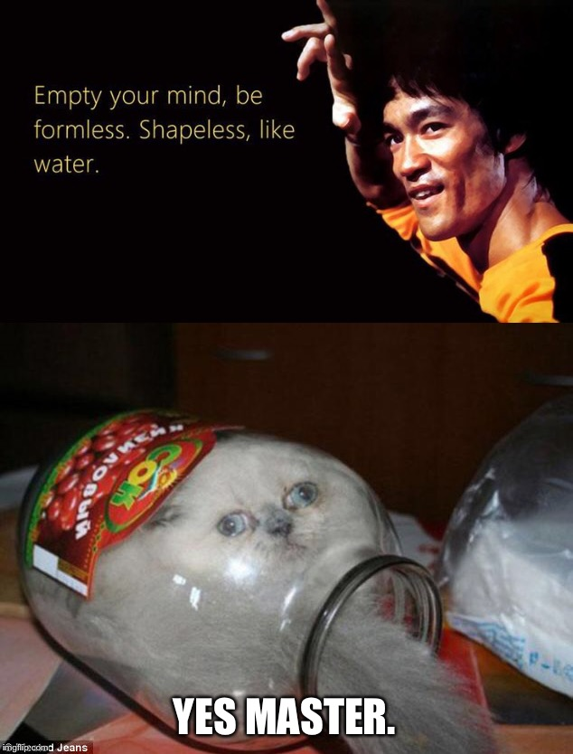 Be Like Water My Friend | YES MASTER. | image tagged in bruce lee,cat | made w/ Imgflip meme maker