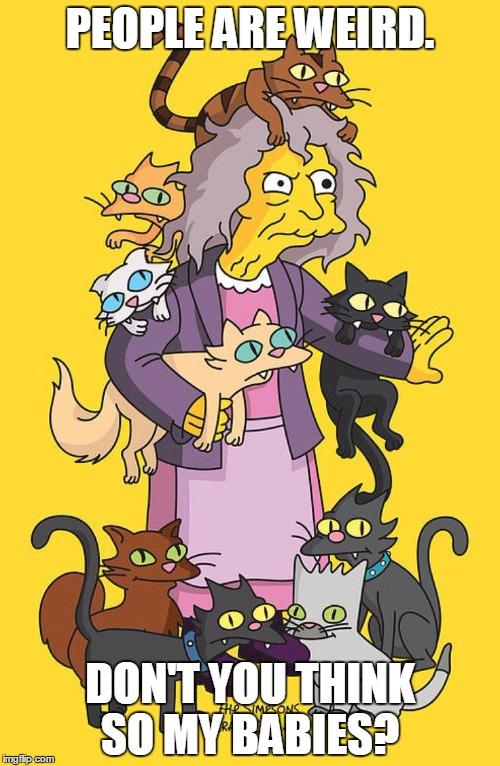 1anxou crazy cat lady imgflip