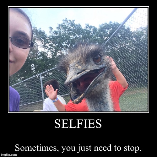 When Selfies Go Wrong | SELFIES | Sometimes, you just need to stop. | image tagged in funny,demotivationals,emu | made w/ Imgflip demotivational maker