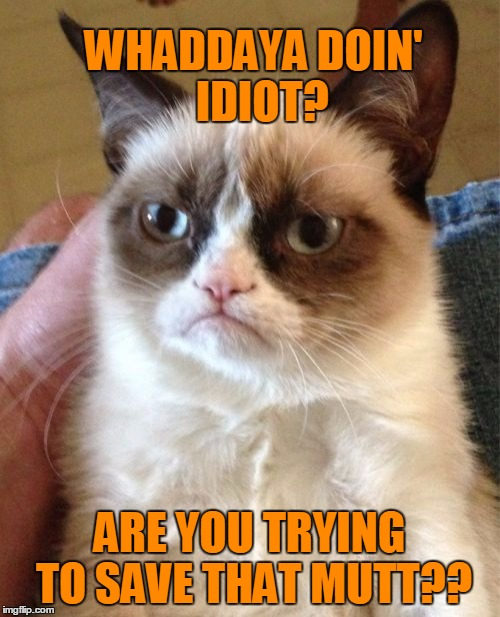 Grumpy Cat Meme | WHADDAYA DOIN'  IDIOT? ARE YOU TRYING TO SAVE THAT MUTT?? | image tagged in memes,grumpy cat | made w/ Imgflip meme maker