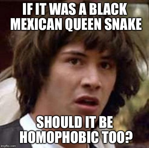 Conspiracy Keanu Meme | IF IT WAS A BLACK MEXICAN QUEEN SNAKE SHOULD IT BE HOMOPHOBIC TOO? | image tagged in memes,conspiracy keanu | made w/ Imgflip meme maker