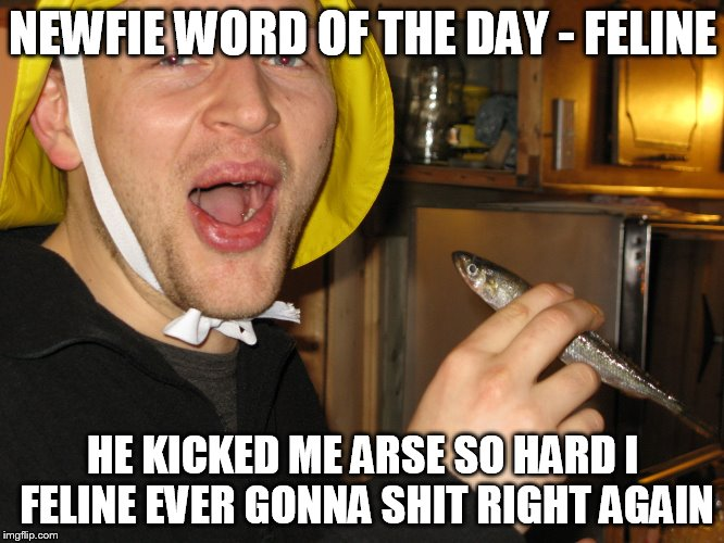 Newfie word of the day | NEWFIE WORD OF THE DAY - FELINE HE KICKED ME ARSE SO HARD I FELINE EVER GONNA SHIT RIGHT AGAIN | image tagged in newfie,word,day,newfoundland | made w/ Imgflip meme maker