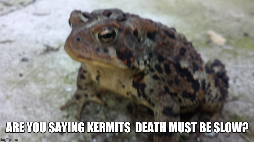 ARE YOU SAYING KERMITS  DEATH MUST BE SLOW? | made w/ Imgflip meme maker