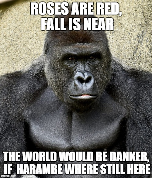Harambe | ROSES ARE RED, FALL IS NEAR THE WORLD WOULD BE DANKER, IF  HARAMBE WHERE STILL HERE | image tagged in harambe | made w/ Imgflip meme maker